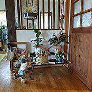 無垢の床/ことりとわんこと♪/本棚DIY/小上がり和室/テキーラテーブル/竹のバッグ…などのインテリア実例