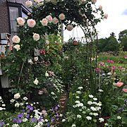 植物/ガーデニング/薔薇アーチDIY/花のある暮らし/バラ/オープンガーデン…などのインテリア実例