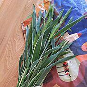 種まき麦のインテリア実例写真