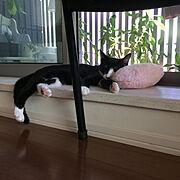 保護猫/いつもありがとうございます/いつもいいねやコメありがとうございます/ひるねねこ…などのインテリア実例