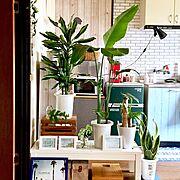 ヒメモンステラ/サーフスタイル好き/グリーンに囲まれ隊/観葉植物/賃貸でも頑張る‼/ドラセナジェレ…などのインテリア実例