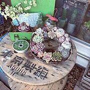 植物/植物に水をあげるところ/DIY/道産子タニラー/IG⇨hanahinasisters/北海道でベランダガーデン…などのインテリア実例