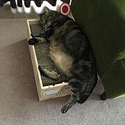 まるちゃん /猫と暮らす/猫と暮らす工夫/猫のいる日常/猫との生活/ねこ…などのインテリア実例