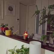 アロマキャンドル/キッチン棚/フロアライト/一人暮らし/平屋/観葉植物…などのインテリア実例