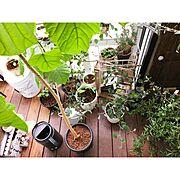 ウンベラータ/植物/観葉植物/時計/ルーバー/吹き抜け…などに関連する他の写真