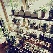 My Shelf/DIY/セメント鉢/リメイク缶/旦那の趣味/卑猥組…などのインテリア実例