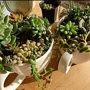 DIY/ダイソー/多肉植物/My Desk…などのインテリア実例