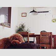わんこと暮らす家/Overview…などのインテリア実例