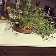 豆苗栽培中のインテリア実例写真