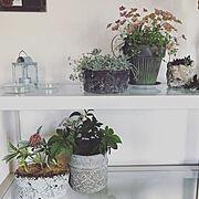 暮らしを楽しむ/花のある暮らし/momo natural/団地/植物のある暮らし/NO GREEN NO LIFE…などのインテリア実例