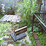 植物/庭/流木/アイアン/garden/ガーデニング…などのインテリア実例