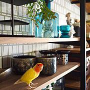 IKEA/マンション暮らし/インコのいる暮らし/コザクラインコ/壁面収納/My Shelf…などのインテリア実例