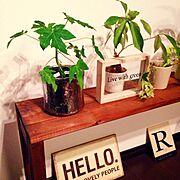 観葉植物/アイビー/chocolate-cafeさん作品/ガーデン雑貨/ガーデンプレート…などのインテリア実例