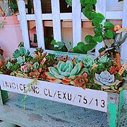 カントリー雑貨/暮らしの一コマ/多肉植物/10000人の暮らし/succulent plants/多肉ちゃん…などのインテリア実例