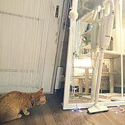 マキタ掃除機/猫/1K/一人暮らし/Overview…などのインテリア実例