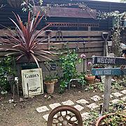 無垢材の床/植物のある暮らし/観葉植物/鉢スタンド/スツール/On Walls…などに関連する他の写真
