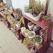 リメ鉢/グリーンネックレス/多肉植物♡/多肉植物寄せ植え/多肉植物/多肉…などのインテリア実例