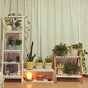 salut!/カエルの置物/岩塩ランプ/観葉植物/Lounge…などのインテリア実例