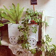 植物/Lounge…などのインテリア実例