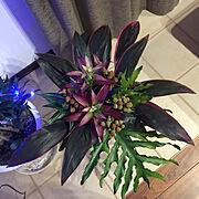 西海岸/照明/観葉植物/IKEA/カリフォルニアスタイル/サーファーズハウス…などに関連する他の写真
