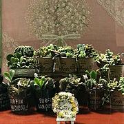 グリーンネックレス♡/アトリエROOF/クリーマーで販売中!/花のある暮らし/多肉寄せ植え…などのインテリア実例