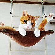 茶トラ白猫/キャットタワー/いいね!ありがとうございます♪/かじゅにゃ〜る/ぼて猫部…などのインテリア実例