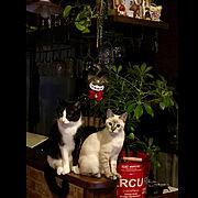 保護猫/インスタ→butachan1222/Room Clipとの出会いに感謝✳︎/ねこのいる日常…などのインテリア実例