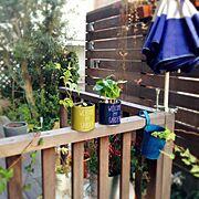 IKEA/オリーブの木/ウッドフェンス/ウッドデッキガーデン/グリーンのある暮らし/ウッドデッキ…などのインテリア実例