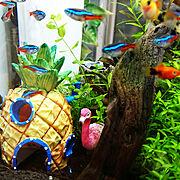 お魚スポンジのインテリア実例写真