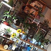 niko♡/収納棚DIY/テーブルdiy/100均/温度計/セリア…などに関連する他の写真