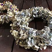 紫陽花ドライリース4個目です/紫陽花アンティークドライ/見て下さって感謝です♡/コメントお気遣いなく♡…などのインテリア実例