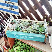 ベランダガーデン/植物のある暮らし/木箱/多肉植物/お金をかけずに/ガーデニング…などのインテリア実例