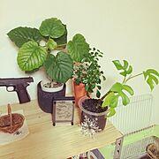 DIY/RC千葉支部入部しました!/手作り/観葉植物/NO GREEN NO LIFE/My Shelf…などのインテリア実例