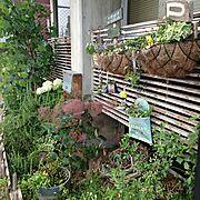 植物/【植中毒】/たまカラ/滋賀県民の会/ハンドメイド/worksNo.715…などに関連する他の写真