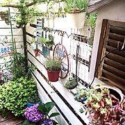 gardening/アイビー/garden/多肉植物/植物/多肉寄せ植え♡…などのインテリア実例