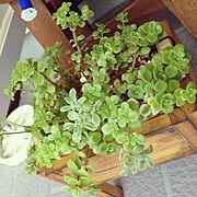 鉢カバー/端材/セダム/多肉植物/Entrance…などのインテリア実例
