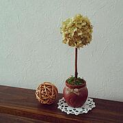 紫陽花の茎を使用/神戸フランツの壷プリン/zenoちゃんのドイリー/両面テープ…などのインテリア実例