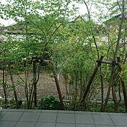 集中力/植物でリラックス/グリーンカーテン/息子机の横の窓からの眺め/On Walls…などのインテリア実例