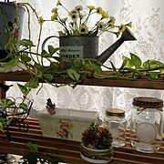 観葉植物 /りめかん/Kitchen…などのインテリア実例