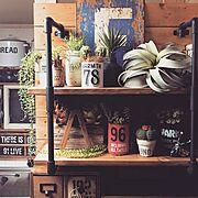 グリーン同盟❤️/NO GREEN NO LIFE/DIY棚/DIY板壁…などに関連する他の写真