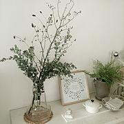 ゴムの木/TODAY'S SPECIAL/ダイニングチェア/Aoyama Flower Market/TODAYS SPECIAL…などに関連する他の写真