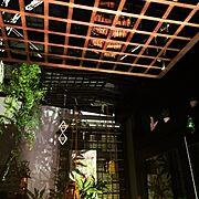 コウモリラン/ビカクシダ/ワイヤークラフト/ミィ/On Wallsに関連する他の写真