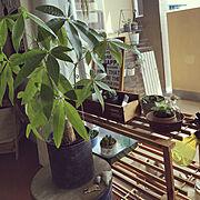 ハオルチア/観葉植物/パキラ/Lounge…などのインテリア実例