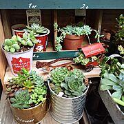 コンテスト参加中/ダイソー/多肉植物/セリア/植物/Entrance…などのインテリア実例