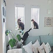 lovecatの人気のインテリア実例