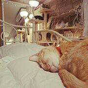 ねこのいる風景/1K/ホワイトインテリア/一人暮らし/Bedroom…などのインテリア実例
