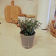 今日も素敵な1日を❤️/マンションインテリア/おはようございます♡/観葉植物…などのインテリア実例