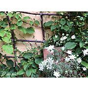 手作り椅子/わさわさワイヤープランツ/手作り格子/玄関アプローチ/葉っぱガーデン/6月の庭…などのインテリア実例