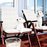 犬のいる暮らし/北欧/北欧インテリア/新居/IKEA/RoomClip5周年…などのインテリア実例