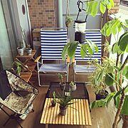観葉植物/PACIFIC FURNITURE /P.F.S/PFS/サボテン…などのインテリア実例